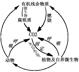 高三生物复习知识点分类与热点知识总结