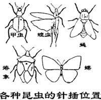 农业昆虫学实习报告