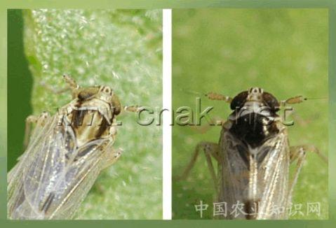 农业昆虫学实习报告2